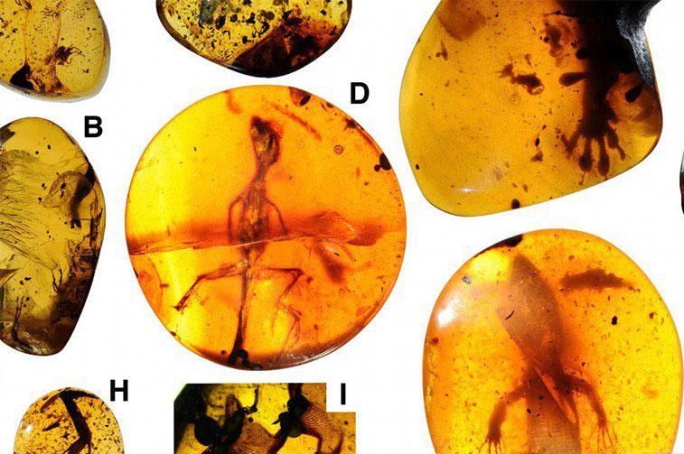 مارمولک هایی که پس از گذشت ۱۰۰میلیون سال زندهاند!+عکس