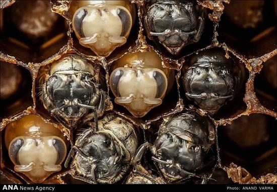 عکسهای شگفت انگیز ماکرو از جانوران