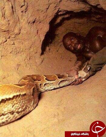بومیان افریقا مار پیتون را اینگونه شکار می کنند+ تصاویر