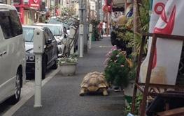 لاکپشت عظیمالجثه و صاحب صبورش + تصاویر