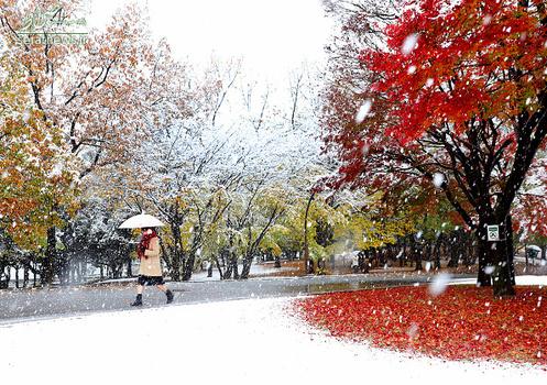 بارش برف در توکیو پایتخت ژاپن پس از نیم قرن از نوامبر سال ۱۹۶۲