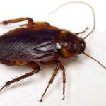 اگر سوسک ها از بین بروند چه بلایی سر زندگی انسان می آید؟