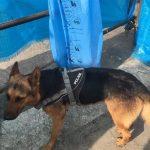 سوختگی این سگ زندهیاب به خاطر حرارت زیر آوار