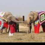 فیل هایی با لباس خواب پشمی را ببینید