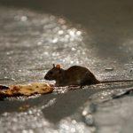 ماجرای فوت روحانی مشهور , او با خوردن مرگ موش مسموم شد؟