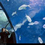 تونل آکواریوم اصفهان را دیده اید؟