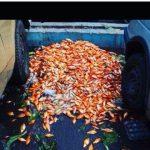 انتقاد میترا حجار از خرید ماهی قرمز