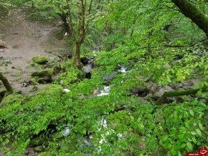 طبیعت خیره کننده قلعه رودخان در فومن