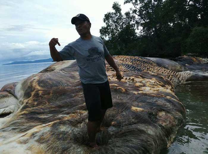 موجود عظیم الجثه در اندونزی