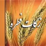 اعلام میزان فطریه امسال توسط هشت مرجع تقلید