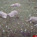 آثار عجیب و وحشتناک بارش شدید تگرگ در اسپانیا