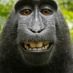 جنجالی ترین سلفی دنیا / میمون خندان کپی رایت را به چالش کشید