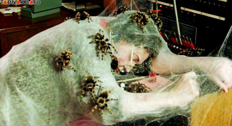 واقعیتی عجیب از قدرت عنکبوت ها در نابودی حیات بشر