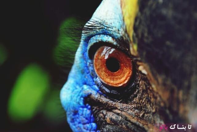 خطرناک ترین پرنده جهان