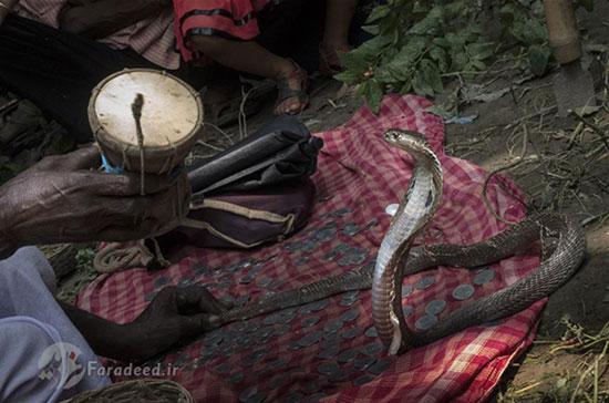 جشنواره نیایش «الهه مار» در هند