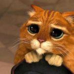 گربه شِرک و چشم های مظلومش در دنیای واقعی پیدا شد!