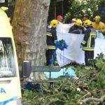 سقوط درخت، 12 نفر را در مراسمی مذهبی کشت