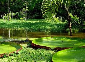 حیوان اسرارآمیزی که پس از ۸۰ سال بار دیگر در آمازون دیده شد!