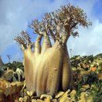 میلیونها سال پیش زمین چه شکلی بود؟