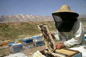 مسابقات جهانی عسل؛ لرستان ایران برنز گرفت