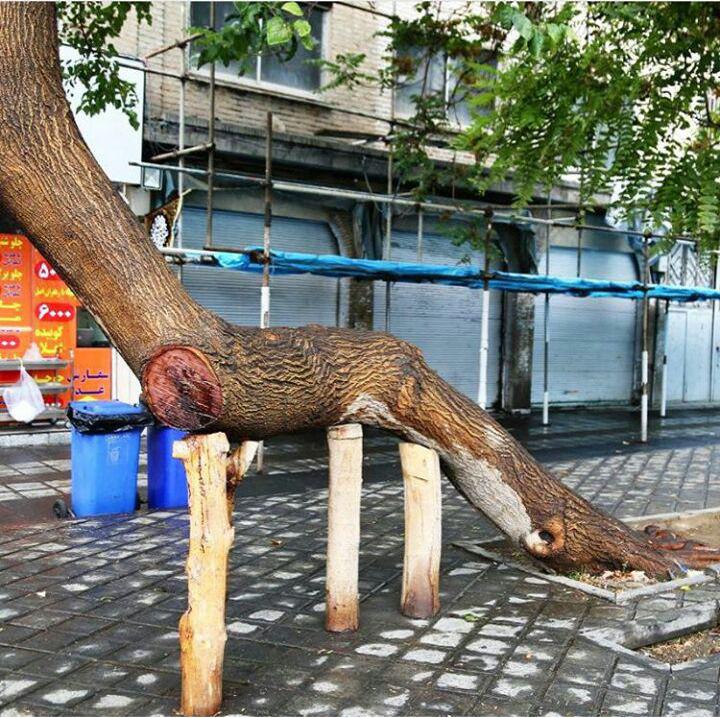 درخت موجود در میدان گمرک تهران