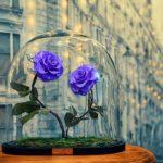 گلهایی عجیب و کاملا طبیعی که تا ابد پژمرده نخواهند شد