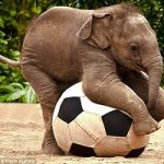 غذا دادن محیط بان به یک بچه فیل سوژه شد