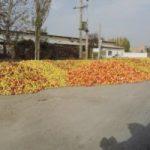 ماجرای تصاویر سیبهای ریخته شده در کنار جادهها چه بود؟