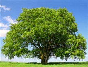 شهری که درختانش توئیت میکنند!