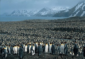 تابستان باورنکردنی قطب جنوب