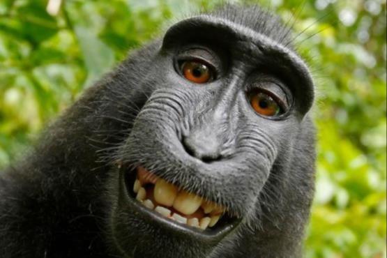 میمون سلفی باز