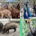 بدترین باغ وحش در دنیا