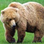 سگی که درنهایت ناباوری خرس است!