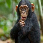 وقتی رفتار یک کودک شبیه شامپانزه شد