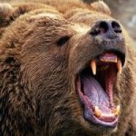 رژه خرس ها در خیابان های کریسمسی رومانی