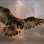 شهری در محاصره عقابها در جزیره یونالاکاک!