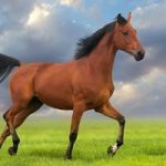 گوشت خام اسب خوراک محبوب ژاپنی ها
