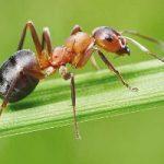 شباهت عجیب و جالب بدن «انسان» و «مورچه»!