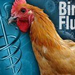 نکاتی برای پیشگیری از ابتلا به آنفولانزای مرغی