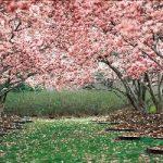 استقبال هندیها از بهار با جشنی به نام هولی