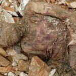 سرنوشت مومیایی کشفشده در حرم حضرت عبدالعظیم چه شد ؟