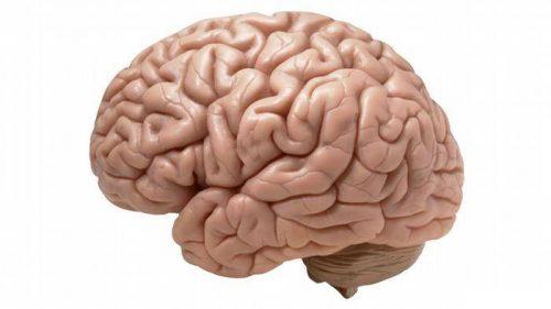 جوان سازی مغز