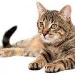 ماجرای خوردن گوشت گربه و کلاغ مرده در جنوب ایران چیست؟