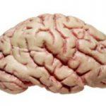 با این راه ساده و راحت مغز خودتان را شاد کنید