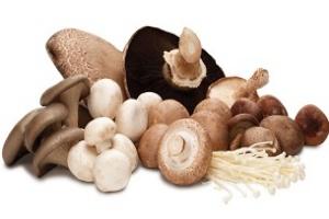 مردم قارچ فلهای و غیر پرورشی به هیچ عنوان نخورند