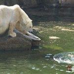 ماجرای حمله خرس ها به زن ۳۲ ساله