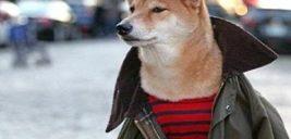 تصاویری دیدنی از سگی که لباس های مارک دار می پوشد