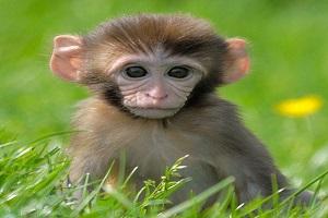 پیدا شدن میمون بازیگوش در نارمک