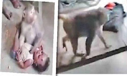 میمون بچه دزد