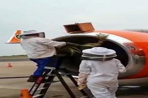 هجوم ۲۰ هزار زنبورعسل در موتور یک هواپیما در فرودگاه بینالمللی